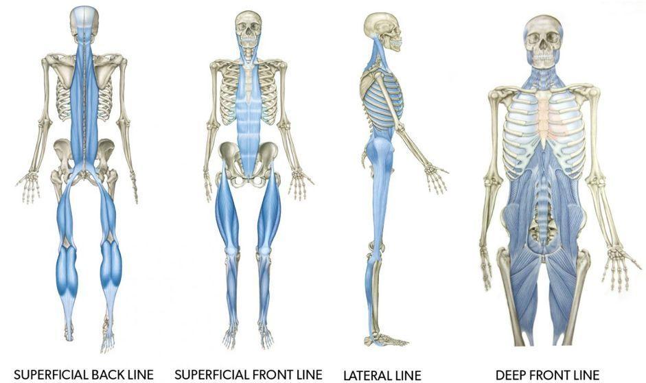 人人都在筋膜健身|GymSquare